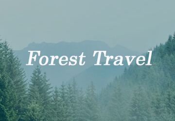 forest-travel